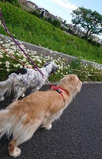 桜道散歩.JPG